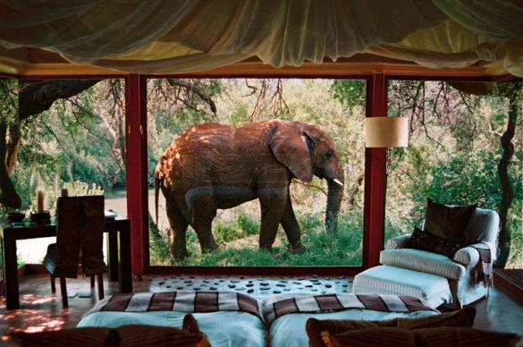 Best Things to Do in Makanyane Luxury Safari Lodge